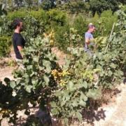 govierno de Aragón material vegetal de calidad